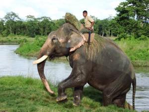 Elephant der Wildhüter im Einsatz