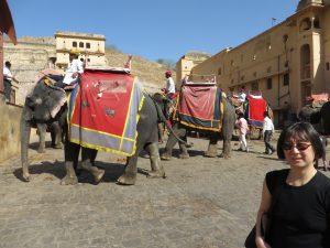 Elefanten in Jaipur