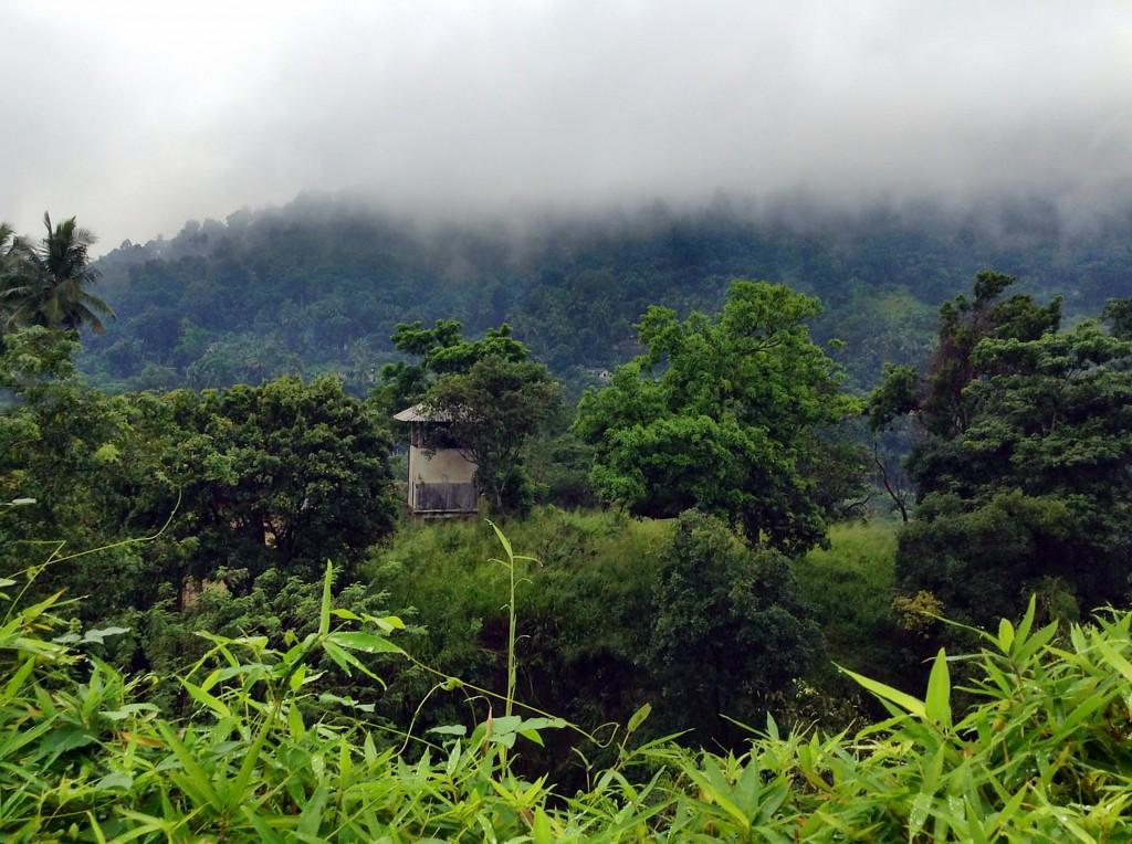 Bergwelt Sri Lankas