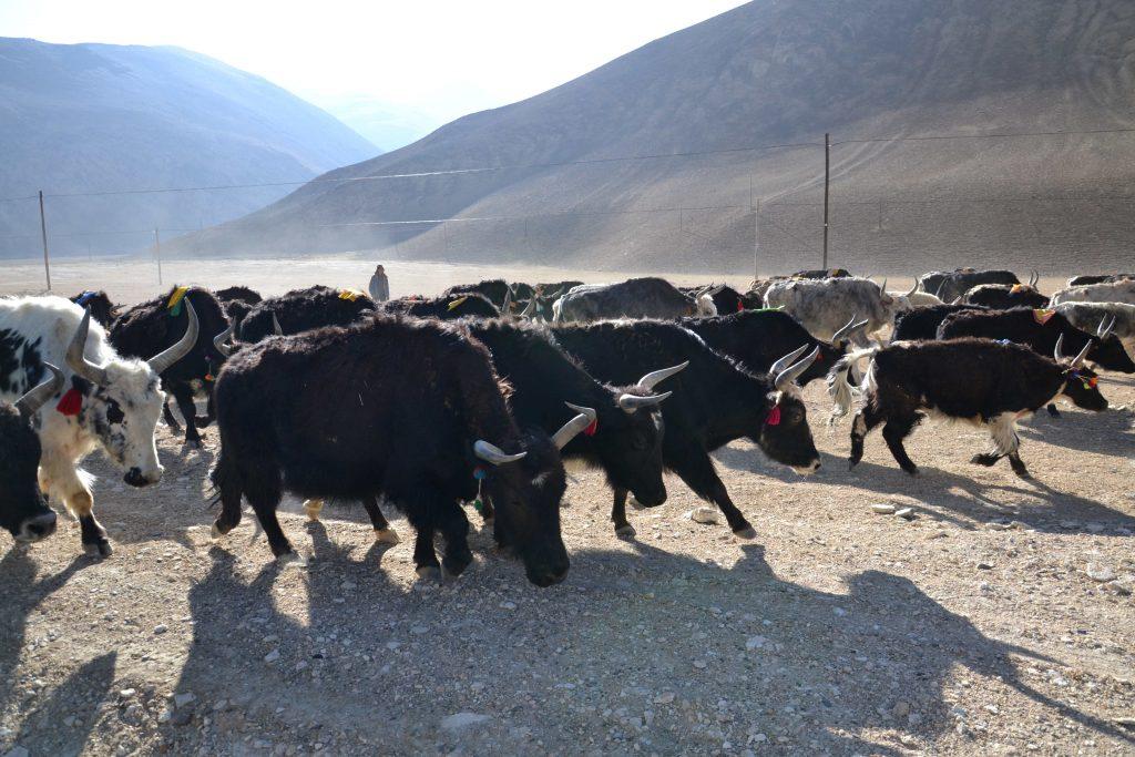 Bilder von Tibet 17