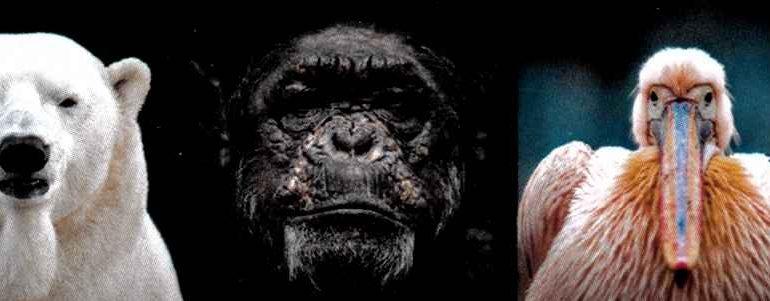 Ein Affe mit einem Gesichtsausdruck wie ein Mensch